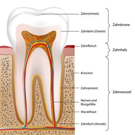 zahnpasta künstlicher zahnschmelz